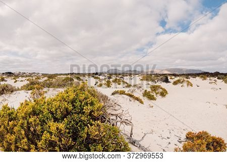 Sandy Beach And Desert Plants In Lanzarote, Canary Islands