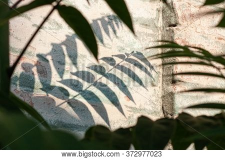 Green Palm Leaves With Shadows On A White Brick Wall Background. Creative Minimalism Trendy Backdrop