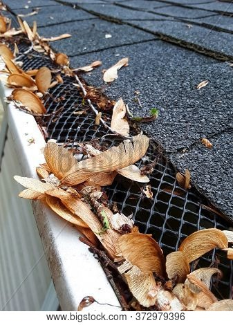Plastic guard over gutter on a roof with seed pods stuck in the netting, focus on seed pod in center and netting