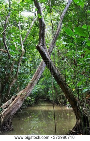 View Of A Water Channel Flooded By The Ocean With Crossed Trees In The Jungle, Nature Of The Tropics
