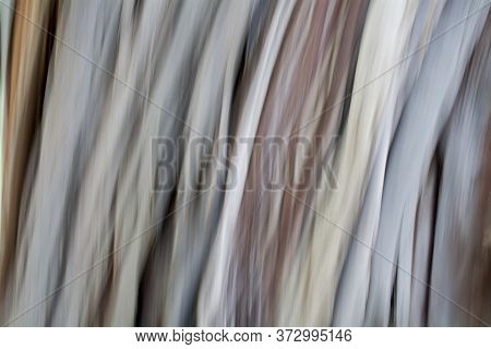 Abstract Vertical Pattern Of White And Brown Blur From The Bark Of A Coastal Redwood
