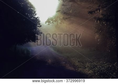 Foggy Morning Sunshine Penetrating Through Trees In An Indian Forest Located In Gurgaon Suburbs In I