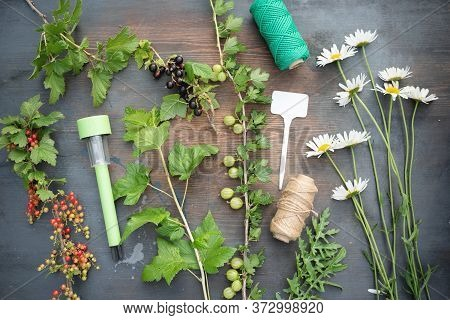 Gardening. Various Plants On A Garden Table Flat Lay Background. Herbal Medicine.