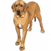 sketch of the fawn dog Great Dane breed poster