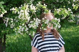 Beautiful Teenage Girl With Curly Hair Hiding Behind Blooming Apple Tree. Curly Blond Teenager Posin
