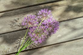 Wild Onion Flowers On An Old Wooden Background In The Shade Of A Tree.