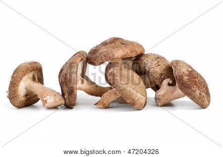 Three fresh shiitake mushrooms