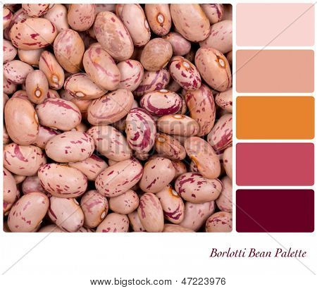 A closeup background texture dried borlotti beans,  in a colour palette with complimentary colour swatches.