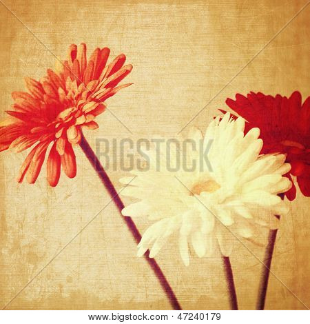 art floral vintage background with red and white gerbera  in sepia