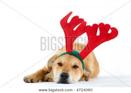 Puppy Dressed As A Reindeer