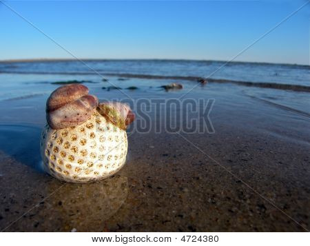 Golf Ball On The Beach With Shells