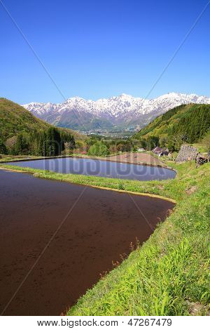 Japan Alps And Terrace Paddy Field