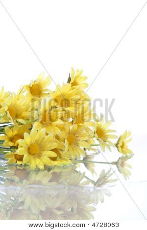 Yellow Daisys Isolated On White Background