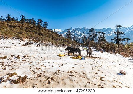 Phedang View Point At Kanchenjunga National Park