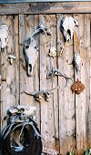 animal skuls on fence poster