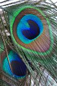 the eyes of two peacock feathers are displayed. poster
