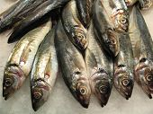 Variety of fresh fish in the market poster