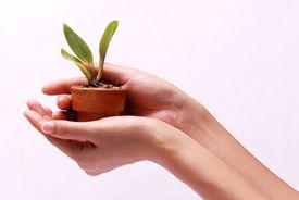Hände Holding Plant
