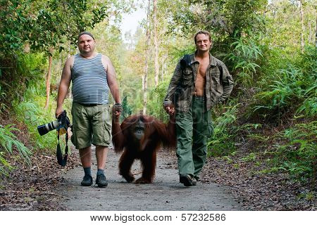 Photographers Walk With Orangutan.