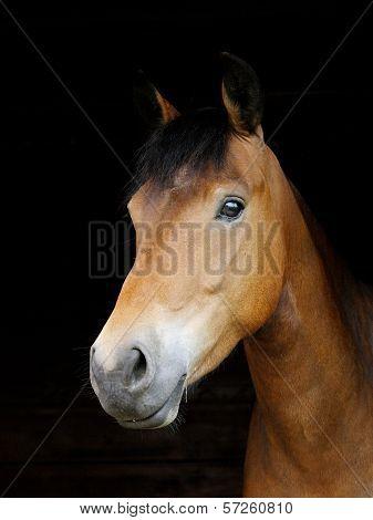 Pony Head Shot