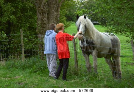 Seeing The Horse