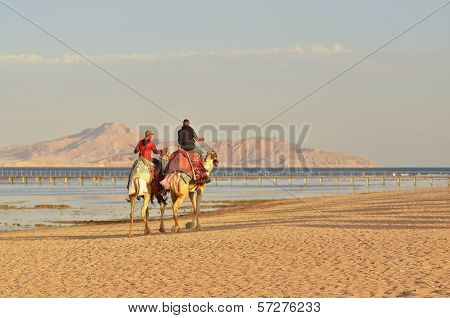 Camel riders at sunset