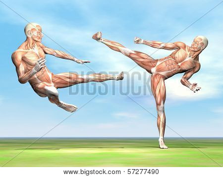 Male musculature fight - 3D render
