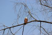 Bald eagle staring by turning its head back poster