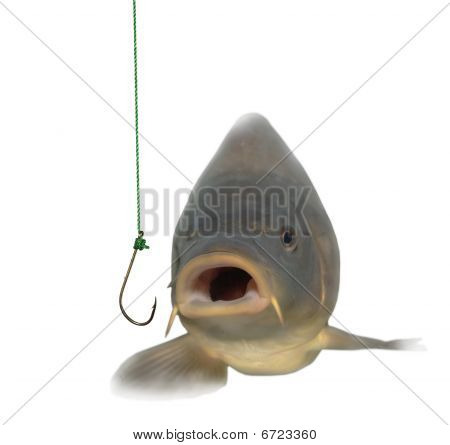 lively carp and empty hook on white background poster