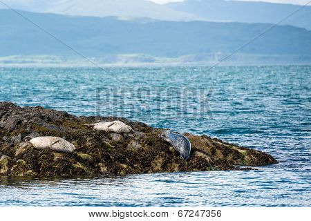 Sea Lions or Seals