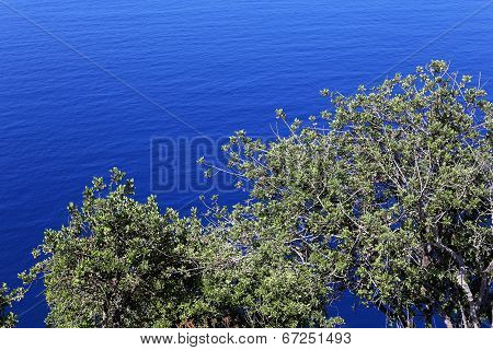 Tree On A Background Of The Sea