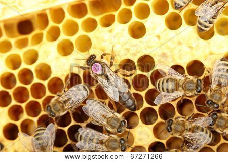 bee queen with populace