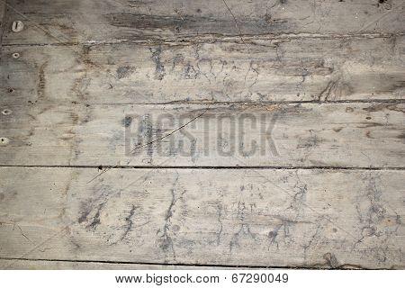 Mycelium Traces On Basement Floor