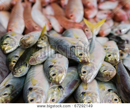 close up heap of sea fish in the market poster