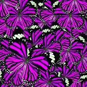 Beautiful Pink Background Texture made of Common Tiger Butterflies in fancy color and patterns poster