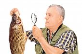 Mature fisherman examining a fish with magnifier isolated on white background poster