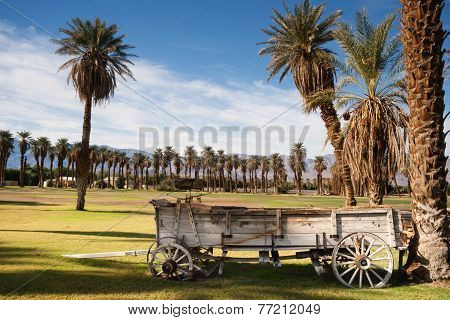 Old Buckboard Covered Wagon Palm Tree Oasis Death Valley