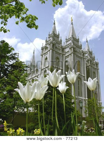 Tulips And Temple