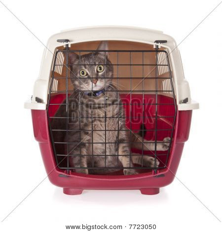 cat closed inside pet carrier isolated on white background poster
