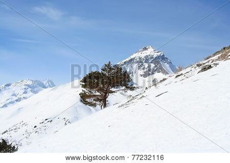 Tree On A Mountain Slope