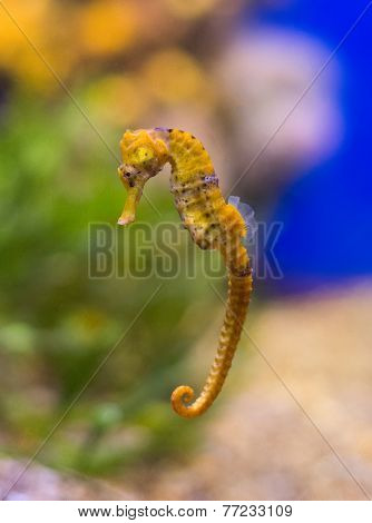 Sea Horse In The Depths Of The Sea.