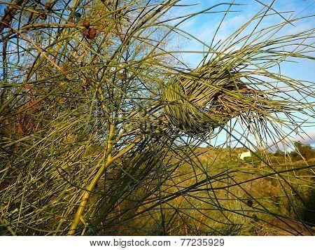 Knotted shrub