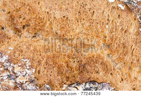 Walnut Bread (detailed close-up shot) for use as background image or as texture poster