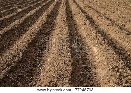 Soil Grooves Farm Lands.