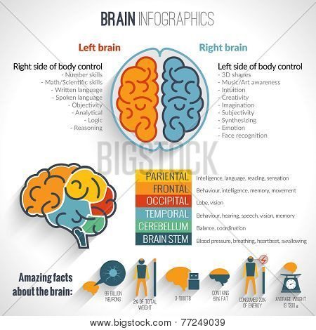 Brain inforgaphics set