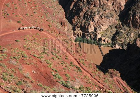 Grand Canyon Mule Train