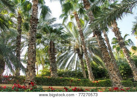 Park with palm in Dubai