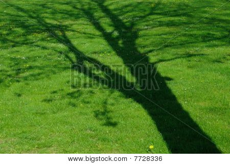 Shade of a tree at a green meadow with flowers poster