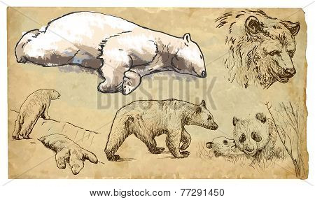 Animals, Theme: Bears - Hand Drawn Vector Pack