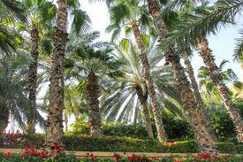 Park with palm in Dubai